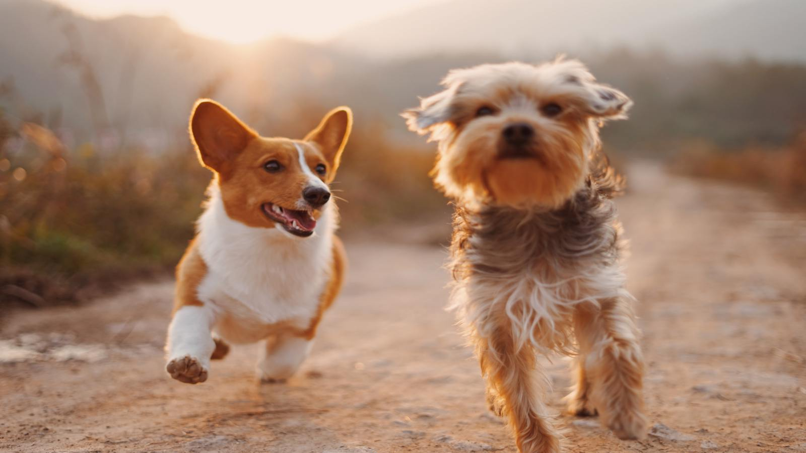 15 Spanish Dog Commands: How To Make Friends With Dogs (And Their Owners)